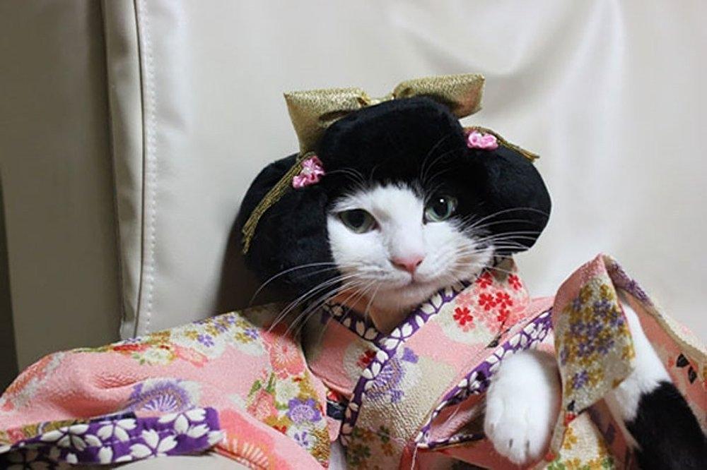 Japonya'da kimono ve kediler artık birbirleriyle sıklıkla anılır oldu galerisi resim 3