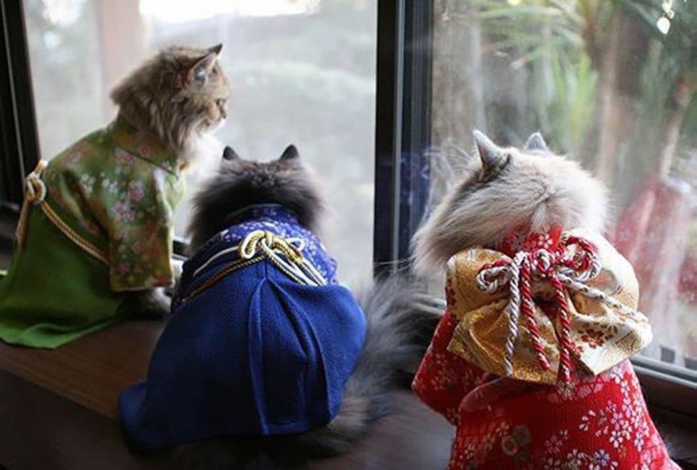 Japonya'da kimono ve kediler artık birbirleriyle sıklıkla anılır oldu galerisi resim 4