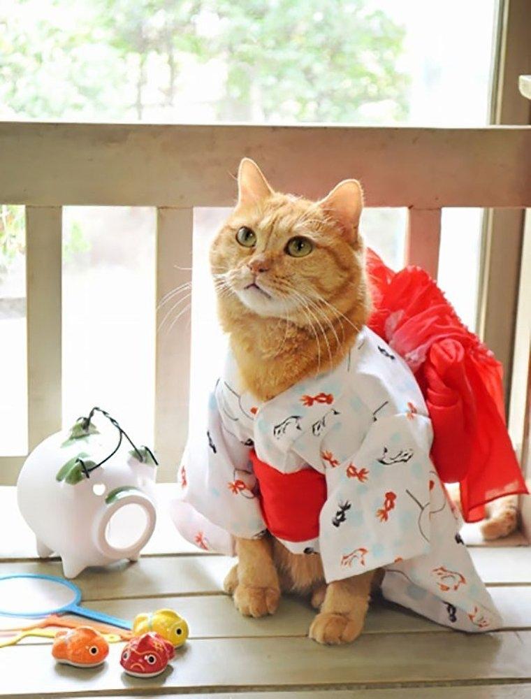 Japonya'da kimono ve kediler artık birbirleriyle sıklıkla anılır oldu galerisi resim 5