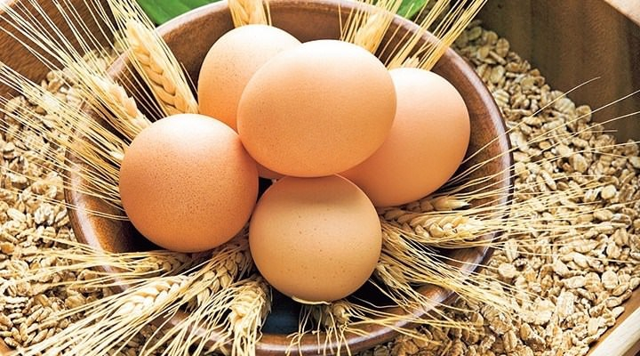 Yumurta, süt ve peynir alırken bunlara dikkat edin! galerisi resim 14