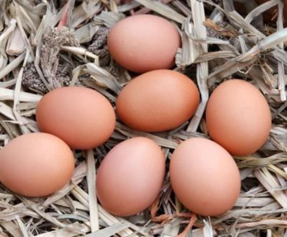 Yumurta, süt ve peynir alırken bunlara dikkat edin! galerisi resim 15