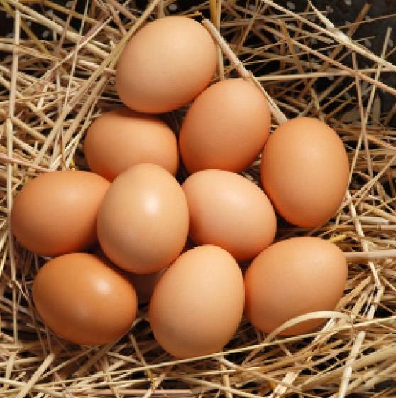 Yumurta, süt ve peynir alırken bunlara dikkat edin! galerisi resim 9