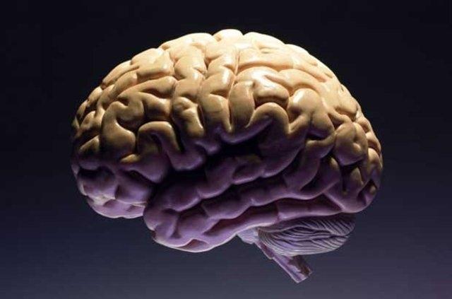 Hafıza pekiştirme ve endişe giderme testi galerisi resim 6