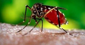 Ünlü sporcu Zika virüsüne yakalandı