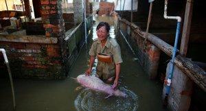 Çin'de sel felaketi: 114 ölü