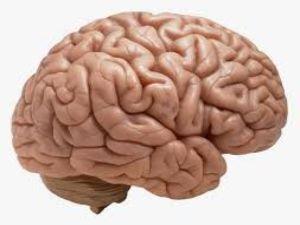 Beyin Sağlığınız İçin Risk Faktörlerinden Korunun!
