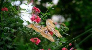 Kelebekler, ziyaretçilerin ilgisini çekiyor