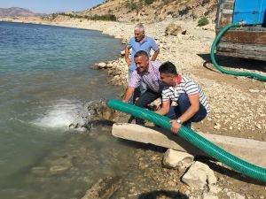 DSİ'den Balıklandırma Çalışması