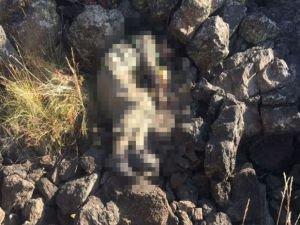 PKK Bölge Sorumlusu Öldürüldü