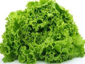 Eylülde en fazla kıvırcık salatanın fiyatı arttı