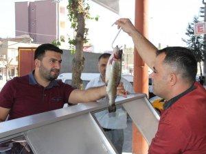 Balık satışları esnafın yüzünü güldürdü
