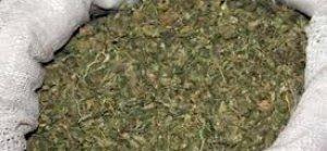Polisin düzenlediği operasyonda 70 kilo bonzai ele geçirildi