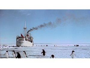 Karaya oturan buzdağı, penguen türünü yok ediyor