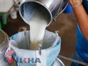 Toplanan inek sütü miktarında azalma yaşandı