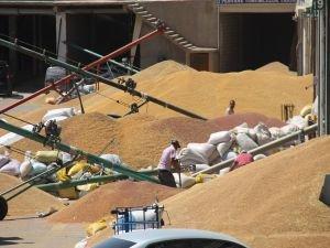 Çiftçiler: Buğdayımız elimizde kaldı!