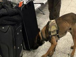 Hollanda'daki köpekli aramaya Türkiye'den misilleme