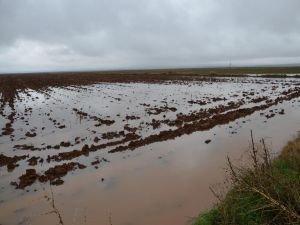 Siverek'te yüzlerce dönüm tarım arazisi sular altında kaldı