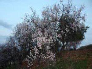 Havaya cemrenin düşmesiyle Adıyaman'a bahar geldi