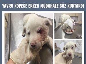 Yavru köpeğe erken müdahale göz kurtardı
