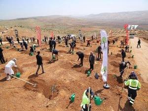 30 bin fidan toprakla buluşturuldu