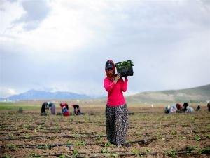 Tarım Ocak ayında bile 5 milyona yakın istihdam sağladı