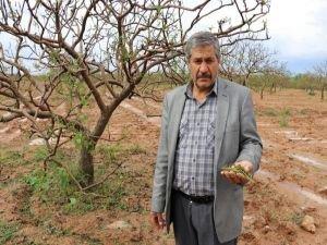 Doludan zarar gören çiftçiler destek bekliyor