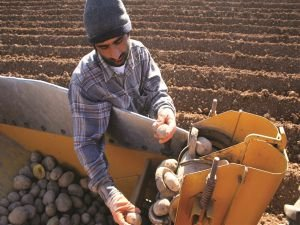 Genç çiftçi desteği için son gün 30 Nisan