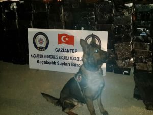 Gaziantep'te 20 bin paket kaçak sigara ele geçirildi