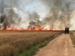 Çıkan yangında 170 dönüm buğdayı kül oldu