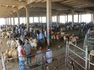 """Çiftçi: """"Yanlış politika hayvan sektörünü çok zayıflattı"""""""