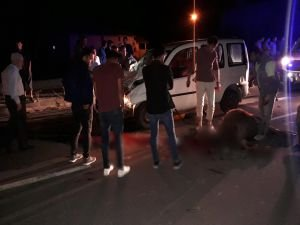 Otomobil yola çıkan ineklere çarptı: 2 yaralı