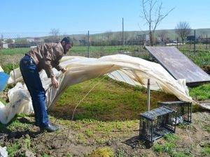 Çiftçiler sebze ekimine başladı