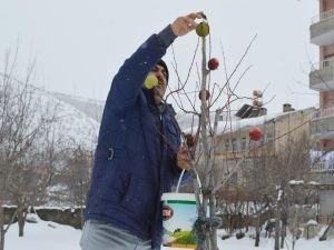 Kuşlar için ağaçları elmalarla donattı