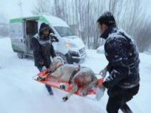 Av tüfeğiyle vurulan köpek 3 saatte kurtarıldı