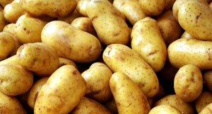 Patatesin buzdolabında saklanması çok tehlikeli