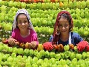 """""""Gaziantep'te Hasat Mevsimi"""" fotoğraf yarışması"""