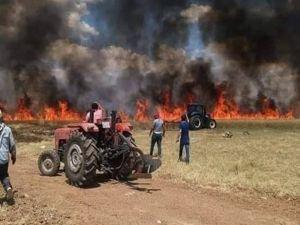Mardin'de 300 dönüm buğday kül oldu