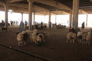 Şanlıurfa'da canlı hayvan pazarı kapatıldı