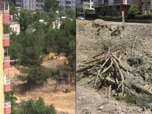 HDP'li belediye 170 ağacı iş makinalarıyla kırıp yerinden söktü