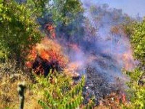 Ormanlık alanda çıkan yangın güçlükle kontrol altına alındı