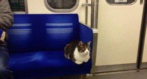 Tokyolu kedi Metronun patronu