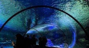 İsfahan şehrinde Ortadoğu'nun en büyük akvaryumu açıldı