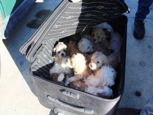 14 Köpek yavrusu kaçakçıların elinden kurtarıldı