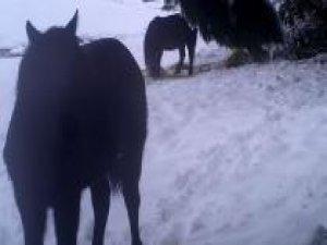 Yem bırakılan yaban hayvanlarının beslenme anları foto kapana takıldı