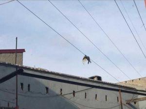 Uçurtmasını kurtarmaya çalışırken elektrik akımına kapılan çocuk hayatını kaybetti