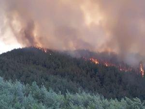 Balıkesir'deki orman yangınında 10 hektar alan zarar gördü
