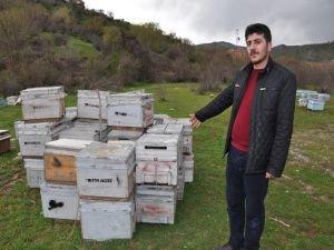 Arıcılar yardım bekliyor