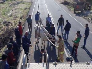 Mahsur kalan ineği itfaiye ekipleri kurtardı