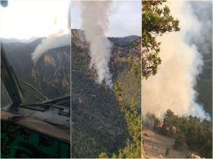 Adana'da çıkan orman yangınına müdahale ediliyor