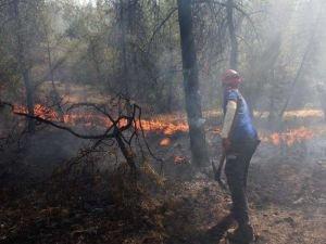 OGM: 3 orman yangını kontrol altına alındı